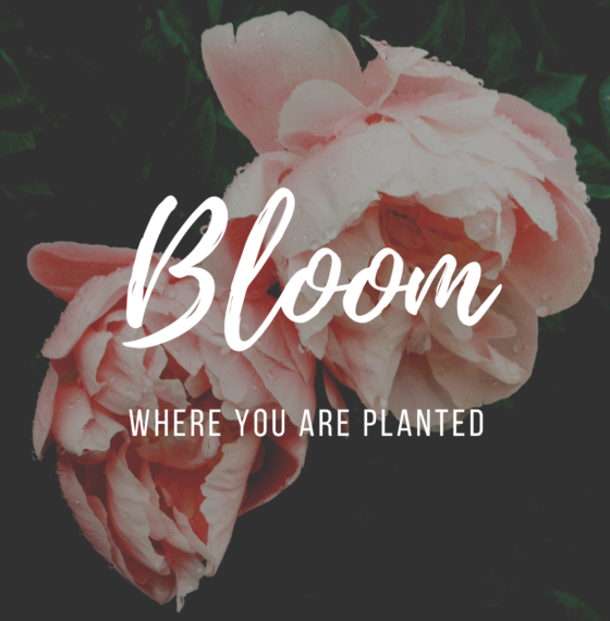 "Why You Might Not Be ""Blooming"" Right Now"